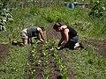 Seattle - Marra Farm 06.jpg