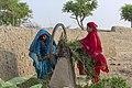 Semi-nomadic Cholistani women are cutting and preparing fodder for animals.jpg