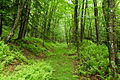 Seneca-nature-trail - West Virginia - ForestWander.jpg