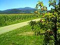 September apples in Denzlingen - panoramio (3).jpg