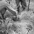 Serie Landmijnen ruimen in Hoek van Holland, Bestanddeelnr 900-6464.jpg