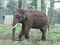 Sidha Mathigodu AJT Johnsingh P1120192.JPG