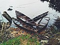 Sinking canoes in the Calabar River.jpg