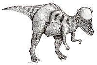 Kresba Pachycephalosaura
