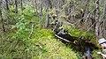 Skuleskogen 20170628 a12.jpg