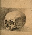 Skull. Pencil drawing by C. Landseer(?), or a contemporary, Wellcome V0008290.jpg