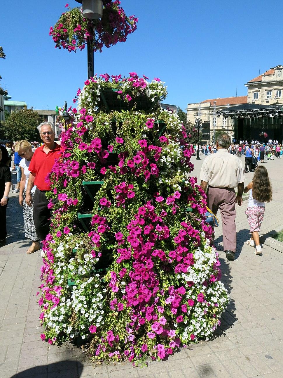 Smederevo, Smederevska jesen, 04