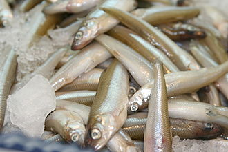 Smelt (fish) - Close-up of smelt for sale at a California seafood market