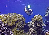 Snorkeling on the Great Barrier Reef.jpg