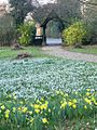 Snowdrops and daffodils, St Mary the Virgin Church - geograph.org.uk - 695189.jpg