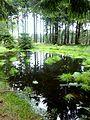 Soonwald - kleiner Waldteich bei Ellern - panoramio.jpg