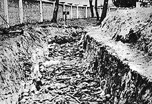 Photo noir et blanc prise à Deblin (Pologne), dans un camp allemand de prisonniers soviétiques. Le long du mur du camp, s'étendant de gauche à droite en haut de la photo, une tranchée expose des ossements humains.