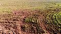 Spalax Mounds, Kfar Hanagid, Isrrael מעגל תילי חולד, שדות כפר הנגיד - panoramio.jpg