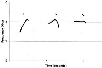 Common chiffchaff - Sketch spectrograms comparing calls of, from left to right, the subspecies collybita, abietinus and tristis