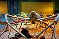 Spider crabs at the Kaiyukan Aquarium in Osaka close.jpg