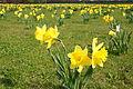 Spring is here (4546144298).jpg