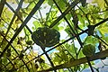 Squash and Vines.jpg