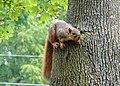 Squirrel 03 (6994360395).jpg