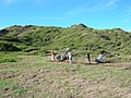 Starr-041120-0969-Cynodon dactylon-trail building-Papanalahoa-Maui (24693741376).jpg