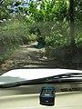 Starr-090617-0980-Terminalia catappa-habit with gps and road-Huelo-Maui (24669770240).jpg