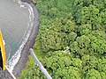 Starr-141014-2242-Caesalpinia decapetala-aerial view at stream mouth-Kakipi Gulch Haiku-Maui (25221027636).jpg