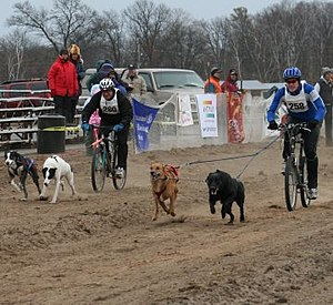 Bikejoring - Start of a Bikejoring race