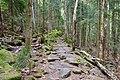 Steinerner Weg im Nationalpark Bayerischer Wald (Feistenberg).jpg
