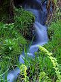 Streams brooks meadows mosses.jpg