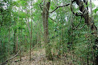 Habitat type