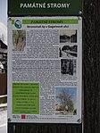 Suchdol - stromořadí lip srdčitých v Gagarinově ulici na Budovci (20).jpg