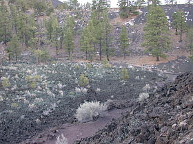 Sunset Crater vegetation.jpg