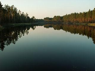 Solska Forest