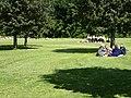 Tangkrogen (picnic 02).jpg