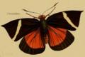 Tascina orientalis Westwood 1877.png