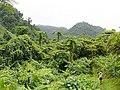 Taveuni Forest, Fiji.jpg