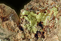 Terlinguaite, Calomel-519277.jpg