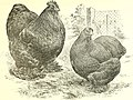 The Asiatics; Brahmas, Cochins and Langshans, all varieties, their origin; (1904) (14773370211).jpg