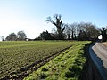 The B1145 past Brick Kiln Farm - geograph.org.uk - 684015.jpg