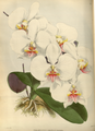 The Orchid Album-01-0035-0011.png