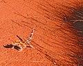 The World Factbook - Australia - Flickr - The Central Intelligence Agency (29).jpg