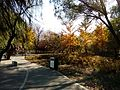 The fall of the Fuyang Park 3.jpg