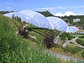 The tropical biome at the Eden Project - geograph.org.uk - 1777967.jpg