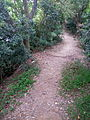 This seem like a dirt path but in fact I was standing upon a 600 year old city wall of Nantou.jpg