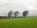 Three Trees Near Auldhouse - geograph.org.uk - 318415.jpg
