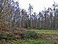Thunderfield Grove Nature Reserve, Cheshunt, Hertfordshire - geograph.org.uk - 110333.jpg