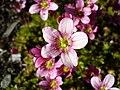 Tinyflowers8.jpg