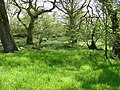 Tony's Patch Nature Reserve - geograph.org.uk - 247332.jpg