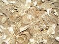 Trace fossils in Uruguay.JPG