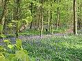 Track through Nine Acre Wood - geograph.org.uk - 416093.jpg