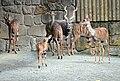 Tragelaphus imbersis Dvur zoo 4.jpg